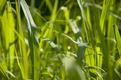 Blades of lush grass in spring. Macro detail of some lush grass blades in a meadow in spring Stock Images