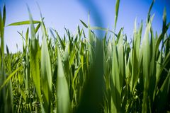 Free Blades Of Grass Stock Image - 2293551