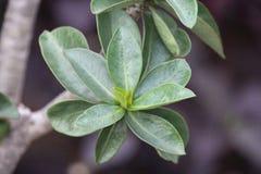 Bladet är viktiga delar av växten royaltyfri foto