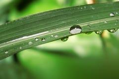 bladet tappar vatten Fotografering för Bildbyråer