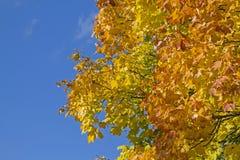 Bladfärgläggning i Oktober Arkivbilder