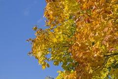 Bladfärgläggning i Oktober Royaltyfri Fotografi
