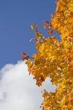 Bladfärgläggning i Oktober Arkivbild