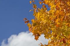 Bladfärgläggning i Oktober Arkivfoto