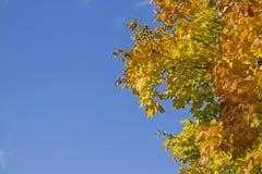 Bladfärgläggning i Oktober Royaltyfria Bilder