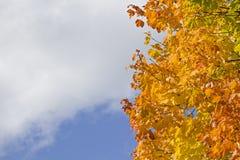 Bladfärgläggning i Oktober Royaltyfri Foto