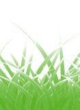bladgräs royaltyfri illustrationer