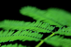 Bladgräsplan Arkivbild