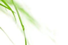 bladgräsraindrop royaltyfri foto