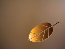 Bladguld på en brun bakgrund Arkivbild