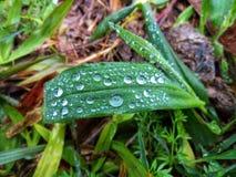 Bladhoogtepunt van regendruppels stock afbeeldingen