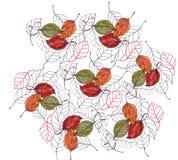 Bladkörsbär, vattenfärg, modell Arkivbilder