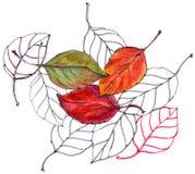 Bladkörsbär, vattenfärg, modell Fotografering för Bildbyråer