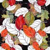 Bladkörsbäret, vattenfärg, mönstrar sömlöst Arkivfoton