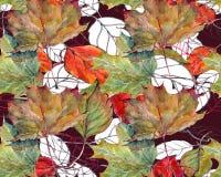 Bladlönn, körsbäret, konturn, vattenfärg, mönstrar sömlöst Royaltyfri Bild