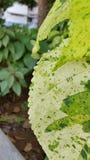 Bladljus - grönt halvt blad Arkivbild
