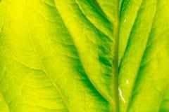 Bladmakromodell av gräsplan Arkivfoton