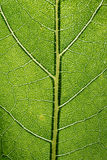 Bladmakromodell av gräsplan Royaltyfri Bild