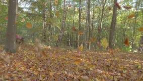 Bladnedgång i höstskogen stock video