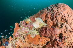 Bladscorpionfish op een donkere duistere middag Stock Afbeelding