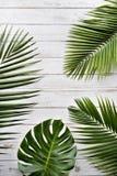 Bladsidor gröna Flora Refreshment Leisure Relax Concept arkivbilder