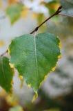 Bladtextuur in de herfst Stock Foto