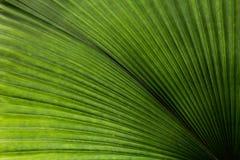 Bladtextuur, een groene natuurlijke achtergrond Royalty-vrije Stock Afbeeldingen