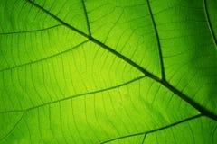 Bladtextuur voor de lenteachtergrond Stock Foto's