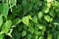 Bladtuinmuur aan foto's door blad in tropisch land Royalty-vrije Stock Foto's