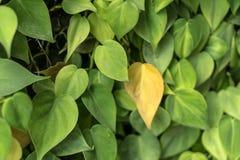 Bladtuinmuur aan foto's door blad in tropisch land Stock Afbeeldingen