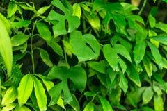Bladtuinmuur aan foto's door blad in tropisch land Stock Fotografie
