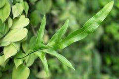 Bladtuinmuur aan foto's door blad in tropisch land Royalty-vrije Stock Fotografie