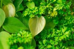 Bladtuinmuur aan foto's door blad in tropisch land Stock Foto