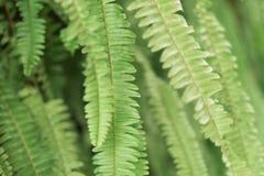 Bladtuinmuur aan foto's door blad in tropisch land Stock Foto's