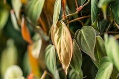 Bladtuinmuur aan foto's door blad in tropisch land Royalty-vrije Stock Afbeelding
