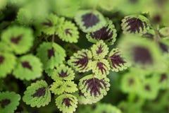 Bladtuinmuur aan foto's door blad in tropisch land Royalty-vrije Stock Afbeeldingen