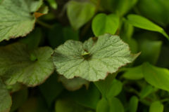 Bladtuinmuur aan foto's door blad in tropisch land Royalty-vrije Stock Foto