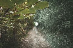 Bladtunnel royalty-vrije stock afbeeldingen