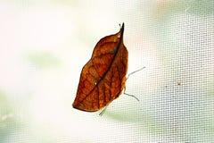 Bladvlinder op netto royalty-vrije stock foto's
