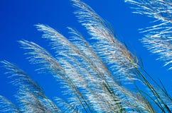 Blady gräsblomma royaltyfri fotografi