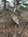 Blady nieżywy liść, zakończenie las jesieni Obrazy Stock