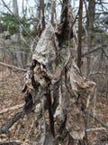 Blady nieżywy liść, zakończenie las jesieni Obraz Royalty Free