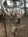 Blady nieżywy liść, zakończenie las jesieni Obraz Stock