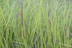 Bladygrass slut upp bakgrund av gröna sidor arkivfoto