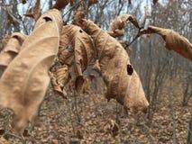 Bladzi nieżywi żółci liście, jesieni natura Fotografia Stock