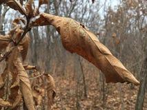 Bladzi nieżywi żółci liście, jesieni natura Obrazy Stock