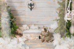Blaireau à l'arbre de Noël dans la neige Photographie stock libre de droits