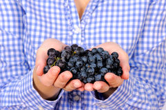 Blak grapes Royalty Free Stock Photo