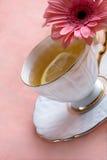 blanc assaisonné de thé de porcelaine Photographie stock
