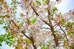 blanc d'arbre de source d'isolement par fond photographie stock libre de droits